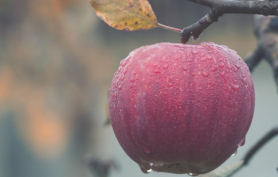 Rosh Hashanah, the New School Year, and a Fresh Beginning